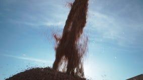 Vista detallada de una corriente constante del trigo de los granos de la cosechadora en el envase del camión metrajes