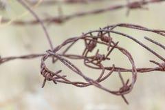 Vista detallada del alambre de púas imagen de archivo