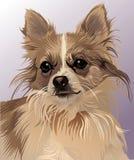 Vista devota del perro ilustración del vector