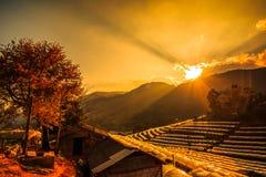 Vista di agricoltura nel tramonto, Tailandia Fotografie Stock
