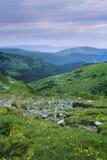Vista di alba del paesaggio della montagna con i fiori gialli, il prato verde ed il cielo blu-viola Fotografie Stock