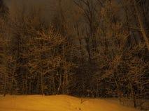Vista di alberi congelata Immagine Stock Libera da Diritti