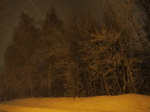 Vista di alberi congelata Fotografia Stock Libera da Diritti