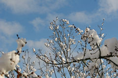 Vista di alberi urbana di inverno Fotografia Stock