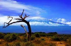 Vista di albero di Kilimanjaro Fotografie Stock