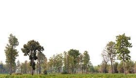 Vista di alta definizione Treeline immagini stock libere da diritti