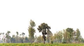 Vista di alta definizione Treeline immagine stock libera da diritti