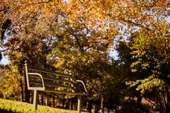 Vista di angolo basso del banco di parco vuoto durante l'autunno Fotografia Stock Libera da Diritti