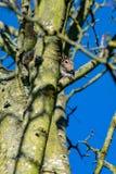 Vista di angolo basso del carolinensis grigio dello Sciurus dello scoiattolo della fauna selvatica fotografia stock libera da diritti
