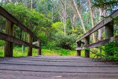 Vista di angolo basso del ponte di legno in natura australiana Immagine Stock Libera da Diritti