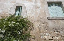 Vista di angolo basso della casa della parete di pietra con la pianta del fiore che cresce nella priorità alta Immagine Stock Libera da Diritti