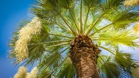 Vista di angolo basso della palma contro cielo blu Fotografie Stock