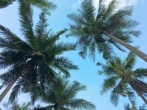Vista di angolo basso delle palme sulla spiaggia tropicale immagini stock
