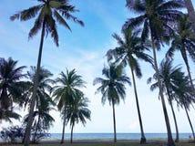 Vista di angolo basso delle palme sulla spiaggia tropicale fotografia stock