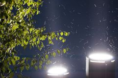Vista di angolo di minimo di notte di estate di Dušanbe Immagine Stock Libera da Diritti