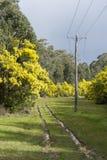 Vista di area di agricoltura nella campagna dell'Australia Fotografia Stock Libera da Diritti
