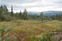 Vista di autunno alle montagne immagini stock