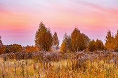 Vista di autunno degli alberi di betulla sul prato fotografia stock libera da diritti