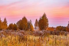 Vista di autunno degli alberi di betulla sul prato fotografie stock libere da diritti