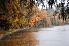 Vista di autunno del lago, alberi Immagini Stock
