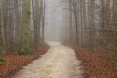 Vista di autunno della natura nebbiosa di autunno della foresta Strada di autunno in denso Immagini Stock Libere da Diritti