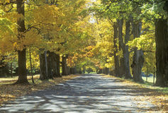Vista di autunno della strada della proprietà terriera di Robbins in Annandale, NY Fotografia Stock Libera da Diritti