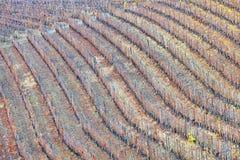 Vista di autunno delle vigne Immagine di colore Immagine Stock