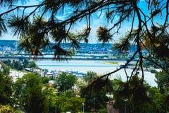 Vista di Belgrado Serbia dal vecchi castello ed albero Immagine Stock