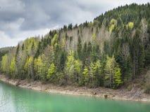 Vista di bella foresta variopinta della montagna di Cesalpina e di Zaovine l Fotografia Stock Libera da Diritti