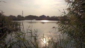 Vista di bello lago nel parco naturale di Vacaresti, città di Bucarest, Romania video d archivio