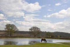 Vista di Bratley, nuova foresta Immagine Stock Libera da Diritti