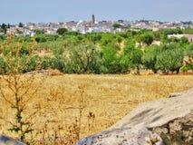 Vista di Casalini, campagna con di olivo Immagini Stock Libere da Diritti