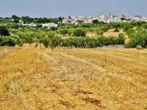 Vista di Casalini, campagna con di olivo Immagine Stock Libera da Diritti