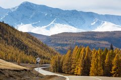 Vista di Chuysky Trakt e foresta gialla di autunno su un fondo della cresta di Nord-Chuya della montagna della Repubblica di Alta Immagini Stock