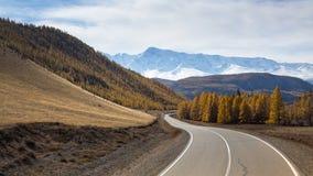 Vista di Chuysky Trakt e foresta gialla di autunno su un fondo della cresta di Nord-Chuya della montagna della Repubblica di Alta Immagine Stock Libera da Diritti