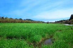 Vista di color salmone della regione paludosa dell'insenatura Fotografia Stock Libera da Diritti