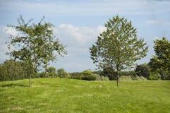 Vista di erba, degli alberi e dei cespugli Fotografie Stock Libere da Diritti