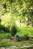 Vista di estate del giardino con le varie conifere Immagine Stock