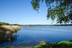 Vista di estate del lago Fotografia Stock Libera da Diritti