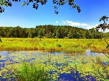 Vista di estate del parco di stato di Burr Pond immagini stock