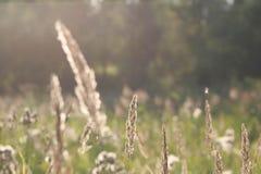 vista di estate dell'erba del campo di angolo largamente immagine stock libera da diritti