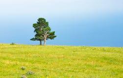 vista di estate dell'erba del campo di angolo largamente Immagini Stock