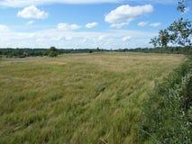 vista di estate dell'erba del campo di angolo largamente Fotografia Stock Libera da Diritti
