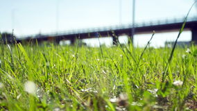 vista di estate dell'erba del campo di angolo largamente stock footage
