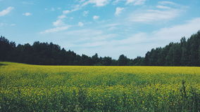 vista di estate dell'erba del campo di angolo largamente Fotografie Stock
