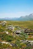 Vista di estate della Svezia Lapponia Fotografia Stock Libera da Diritti
