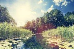 Vista di estate di un fiume nel legno Immagini Stock