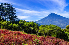 Vista di fioritura del vulcano & del pendio di collina Fotografie Stock Libere da Diritti