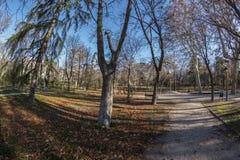 Vista di Fisheye 180 di uno spazio nel parco di Retiro nella città di Madrid Immagine Stock