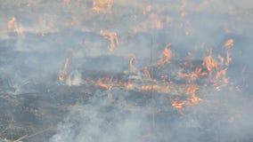 Vista di fuoco selvaggio pericoloso terribile di giorno nel campo Erba asciutta bruciante della paglia Un'ampia area della natura stock footage